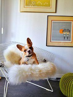 desire to inspire - desiretoinspire.net - Monday's pets onfurniture