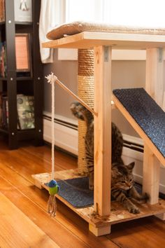 Our DIY cat condo | DIY ideas | Pinterest #cat #hammock - Catsincare.com