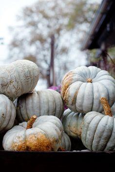 Heirloom pumpkins at Terrain | Cannelle et Vanille