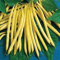 Soleil bush bean. This extraordinary, yellow French/filet bean has an unparalleled, exquisite flavor that makes a wonderful addition to any gourmet meal, and it looks great in canning jars. Slender, sunny yellow pods are at their peak flavor when 6 inches long. The upright, 2 foot tall plants are adorned with loads of beans throughout the summer. White seeds. 60 days