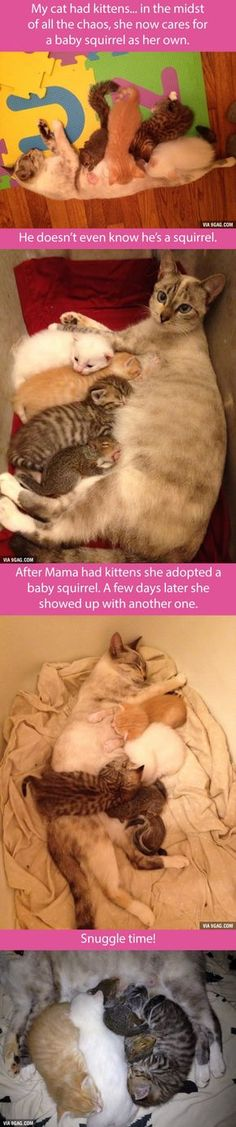 Mama Cat and her adopted squirrels... there are two now!....I can't help but wonder if she killed the mother squirrel 0_0