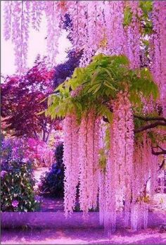 Flowers Beautiful Photography Trees 23 Ideas For 2019 Beautiful Flowers Garden, Amazing Flowers, Pretty Flowers, Beautiful Gardens, Cascading Flowers, Unusual Flowers, Beautiful Nature Wallpaper, Beautiful Landscapes, Nature Pictures