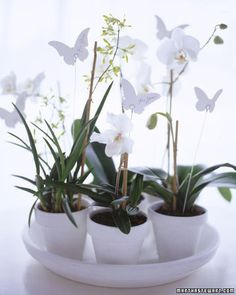Perfect as a centerpiece for the party or as individual guest favors (perhaps at a shower), stunning orchids emerge from terra-cotta pots painted white and arranged on saucers; a butterfly-shaped tag on a thin wire holder hovers over each plant.