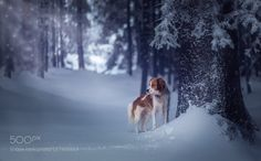 Snowy by wh33ler #animals #animal #pet #pets #animales #animallovers #photooftheday #amazing #picoftheday
