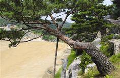 アドナイ・エレ松 / 旧・東北壁画造景 ゴールの後ろの紅松 - WolMyeongDong(キリスト教福音宣教会)