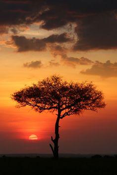 Sunset, Kenya.   (Photo by John Haugh)