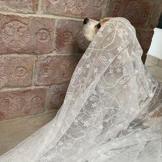 Lace Wedding, Wedding Dresses, Ghosts, Bride Dresses, Bridal Gowns, Weeding Dresses, Wedding Dressses, Bridal Dresses, Wedding Dress