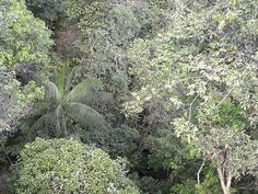 Huasa--or-palmito-euterpe-001.jpg (640×480)