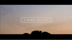 A bird ballet | Short Film by Neels CASTILLON. We were shooting for a commercial with my D.O.P, waiting for an helicopter flying into the sunset, when thousands and thousands of birds came and made this incredible dance in the sky. It was amazing, we just forgot our job and started this little piece of poetry... Enjoy !