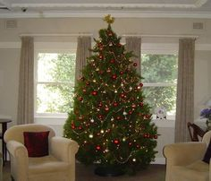The Christmas Tree Man - delivering perfect pines to your home