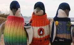 Australia's oldest man likes to knit mini sweaters for injured penguins Animals And Pets, Baby Animals, Funny Animals, Cute Animals, Penguin Love, Cute Penguins, Penguin World, Animal 2, Pet Costumes