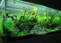 Layout par David 27. #aquarium #aquascaping