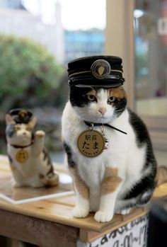"From wiki: ""Tama (たま, born April is a calico cat who is the station master and operating officer at Kishi Station in Kinokawa, Wakayama, Japan. Wakayama, I Love Cats, Crazy Cats, Cool Cats, Gato Calico, Animal Gato, Photo Chat, Cat Hat, Cat Costumes"