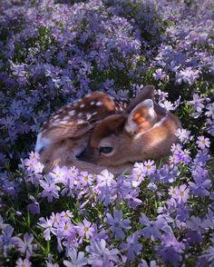 baby deer resting in purple flowers