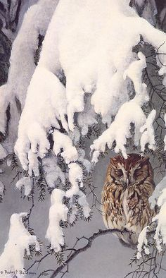 Screech Owl!!!  Love it!!!  I have always been obsessed with owls!!