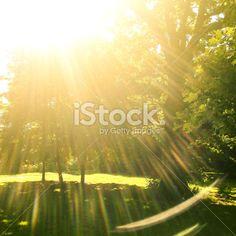 Végétation Verdoyante, Lumière du soleil, Feuille, Plante, Arbre Photo libre de droits Images, Photos, Sun Light, Plant, Cake Smash Pictures