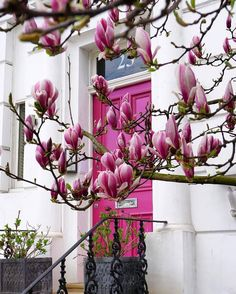 """8,007 Likes, 43 Comments - ELLE DECOR (@elledecor) on Instagram: """"Blooms to match the door.   Photo: @a_ontheroad #regram #travelgram #nottinghill"""""""