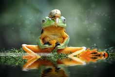 frog - Anything good down there?