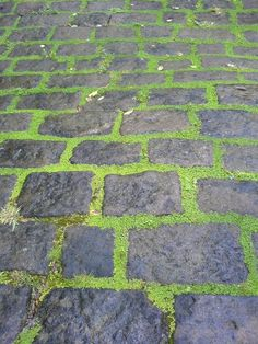 I Do So Love a Cobblestone and Moss Walkway, Though It Can Be a Little Slippey, Slidey When Damp, but, What Character.