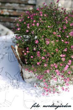 Pretty Little Pink Buds.