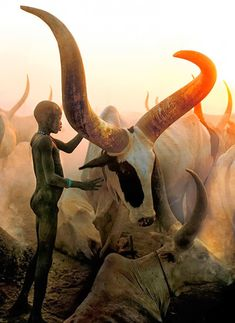 The photographers Carol Beckwith and Angela Fisher documented the daily lives of the Dinka people, a fascinating tribe in southern Sudan. The Dinka people are distinctive for their close relationship with cattle, with which they live in perfect harmony. Beautiful Creatures, Animals Beautiful, Cute Animals, Animals Amazing, Wild Animals, Baby Animals, Nature Animals, Foto Art, Tier Fotos