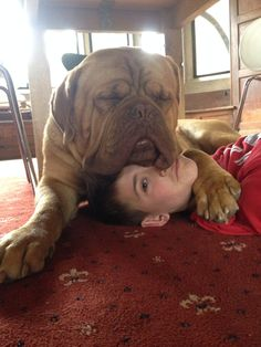 Find Out More On The Good-Natured Mastiff Dogs Personality Giant Dog Breeds, Giant Dogs, Large Dog Breeds, Best Dog Breeds, Big Dogs, I Love Dogs, Cute Dogs, French Mastiff Puppies, Bull Mastiff Dogs