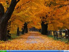 Fall+Trees | autumn-beauty-trees-leaves