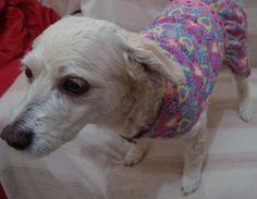 Vestido para cadelas - Ângela Oliveira - Amostra 46 #costura #artesanato