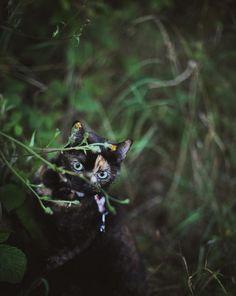 Elle part avec son chat et publie leurs magnifiques photos de vacances !