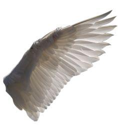 Wing PNG 1 by EveLivesey.deviantart.com on @deviantART