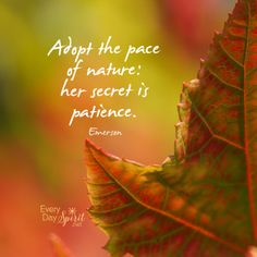 Make space for patience and silence ~ #calm For the app of beautiful wallpapers ~ www.everydayspirit.net xo