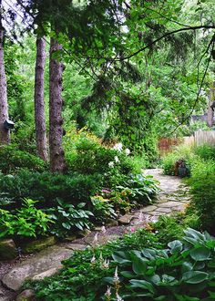 windy paths thru shade garden: hosta, astilbe. rudbeckia& oriental lillies where the sun can reach 'em.