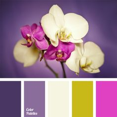 The contrast of deep dark blue, white and fuchsia color balanced with shade of amethyst and mustard adds a warm notes to the gamma. Good solution for interior of bedroom, rest rooms, bathroom and boudoir. Man's or woman's wardrobe made in these colors will look elegant and restrained.