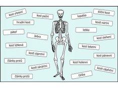 kostra lidské tělo Montessori, Classroom, Science, Education, Memes, Book, Tela, Science Labs, Health