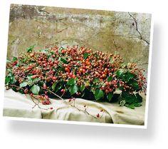 Herfsttip! Van de Pol: 'Je hebt echt geniale en fantastische rozenbottelsoorten, perfect van vorm! Je moet de rozenbottel ook zien als een fruit, zoals een braam of framboos. Ook net zo kan de rozenbottel pas geoogst worden in het tweede jaar. Wij kweken onze rozenbottels op natuurvriendelijke wijze en aan Mijn Bloemist leveren we groene en rode rozenbottels tot eind oktober. Met de rode rozenbottels zijn zeer unieke en stijlvolle herfstkransen te creëren. De rozenbottel is een klein…