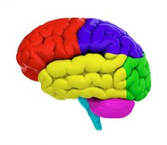 Mental illness: Could brain size be a risk factor?