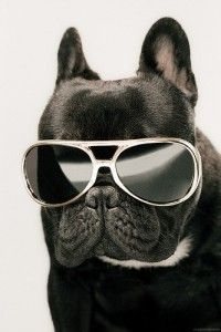 COOL FRENCHIE