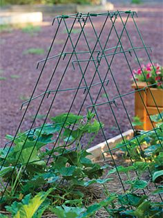 """Squash and Cucumber A-Frame Support - Plant Supports at Cooksgarden.com (keep plants off ground preventing diseases, pests,poor quality fruits. 42"""" span, 48"""" tall-$34.95)"""