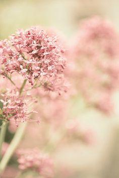 soft vintage pink