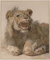 Primary Title: A Lion Snarling Maker Name: Cornelis Saftleven (Dutch, 1607 - Type: Drawings Medium: Black and red chalk and black and brown washes Date: about 1625 - 1633 Source: J. Canvas Art Prints, Fine Art Prints, International Cat Day, Getty Museum, Animal Sketches, Animals Images, Old Master, Art Reproductions, Painting & Drawing