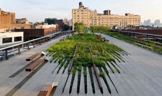 """Fingers of Foliage"" in NYC's High Line."