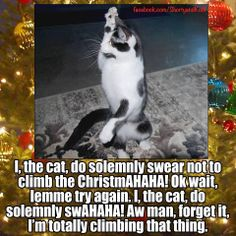 I the cat, do solemnly swear not to climb the Christmas ...