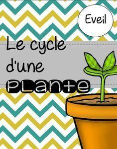 """Dossier complet sur le cycle d'une plante. Leçon créée à partir de l'histoire """"Jacques et le haricot magique"""", comprenant des expérie..."""