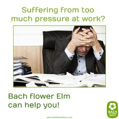 Suffering from too much pressure at work? Bach flower Elm can help you! #elm #bachflowerremedies #Bachflowers