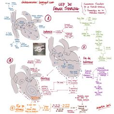 La Chuleta de Osler: Cardiología: Ley de Frank Starling