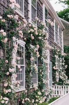 pink climbing roses garden aesthetic A Week On Nantucket, Part 2 - Gal Meets Glam