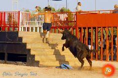 torodigital: La ganadería de Machancoses arranca el concurso d...