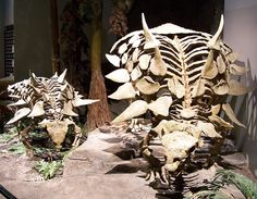 #Gastonia skeletons, North American Museum of Ancient Life (photo: Zach Tirrell) #dinosaur