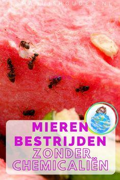 5 manieren om mieren te bestrijden zonder chemicaliën - Firma Huishouden Anti Mosquito, Ants, Good To Know, Easy Diy, About Me Blog, Cleaning, Fruit, Om, Gardening
