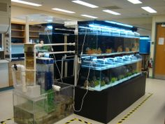 fish breeding setup